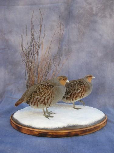 Gray partridge pair mount; Iowa