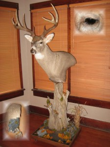 Whitetail deer floor pedestal mount; Aberdeen, South Dakota