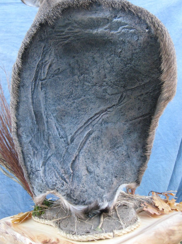 Deer Head Mount >> Showpiece Taxidermy: South Dakota Deer Mount Taxidermist
