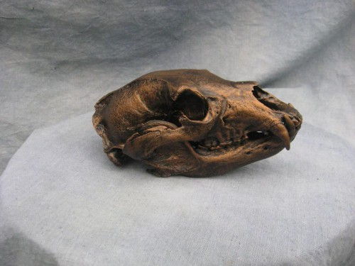 Bronzed black bear European skull mount; British Columbia, Canada