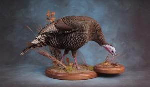 Turkey taxidermy mount; South Dakota