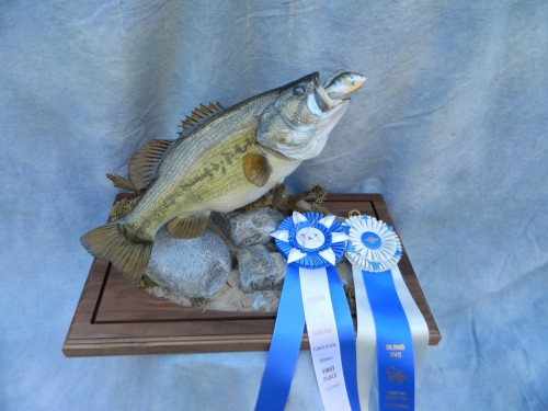 Largemouth bass reproduction fish mount; Award winner in Colorado and Nebraska