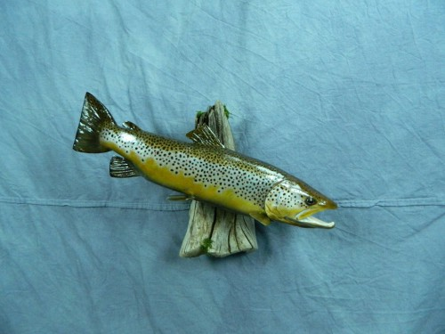 Brown trout fish mount; Black Hills, South Dakota