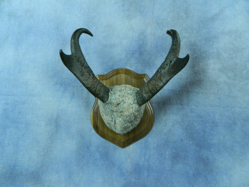 Antelope horn rock mount; Mobridge, South Dakota