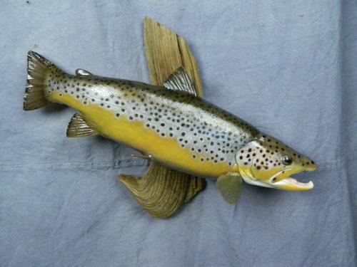 Brown trout skin mount; Denver, Colorado