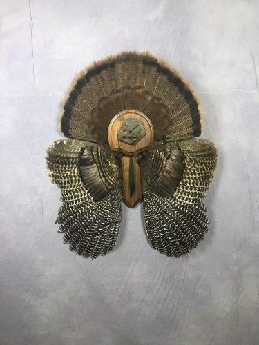 Eastern Turkey Tail Fan and Wing Mount; South Dakota
