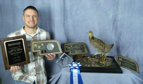 Greater Prairie Chicken Mount; Nebraska Award Winner