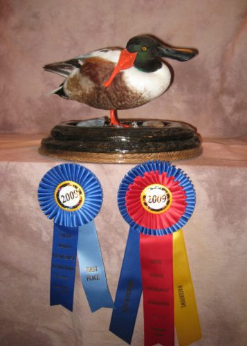 Northern Shoveler Mount; National Taxidermy Competition Award Winner