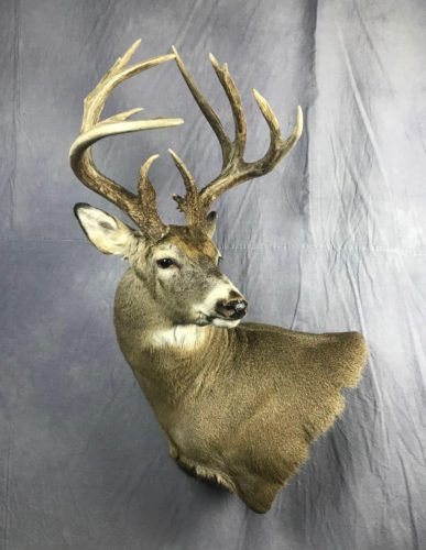 White-Tailed Deer Wall Pedestal Mount Eastern SD (1)