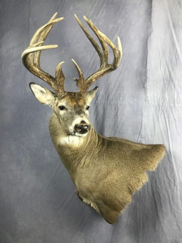 White-Tailed Deer Wall Pedestal Mount Eastern SD (3)